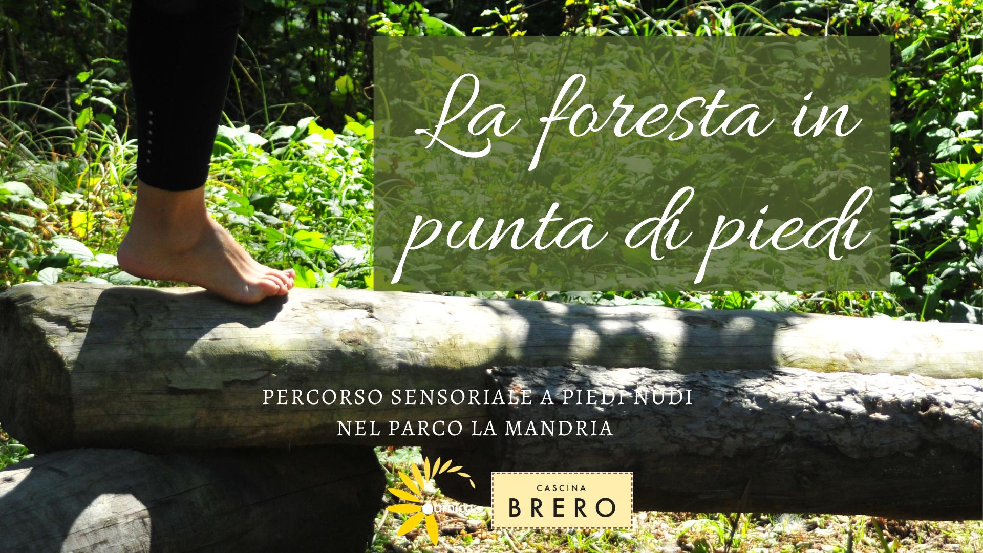La Foresta in punta di piedi - barefooting