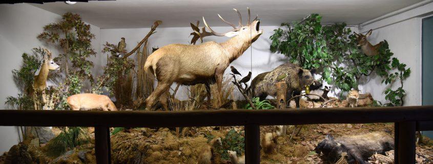 Diorama animali del Parco